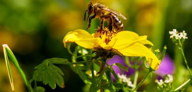 bee on flower - true trust